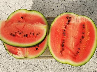 vkusniogorod - когда срывать арбуз - спелый плод