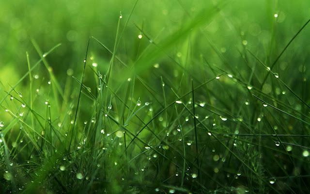 Трава на рабочий стол