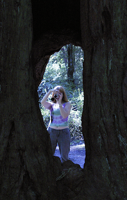 Robin taking photo through redwood tree