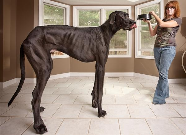 Worlds Biggest Dogs Fashion
