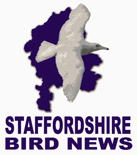 Staffordshire Bird News