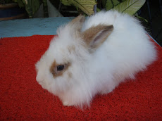 TEDDY BEAR MIX LOP