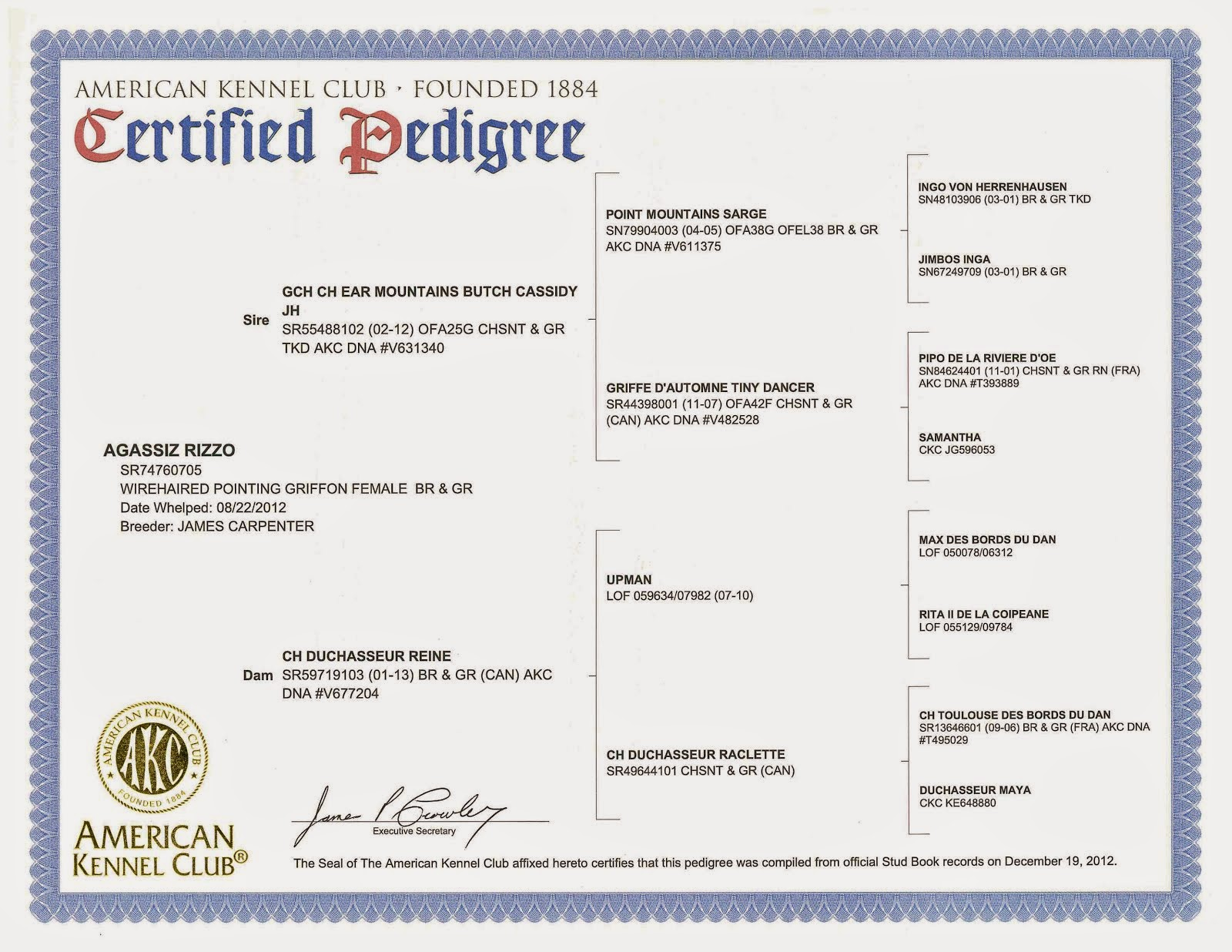 "Rizzo's Pedigree - OFA Certification ""GOOD"""
