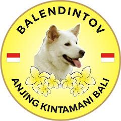 BalendinTov Anjing Kintamani Bali