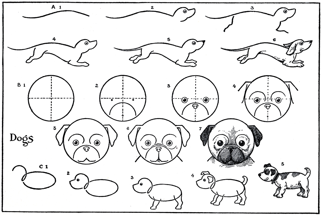 ... Graphics Fairy LLC*: Kids Printable - Draw Some Dogs - Pug - Dachshund