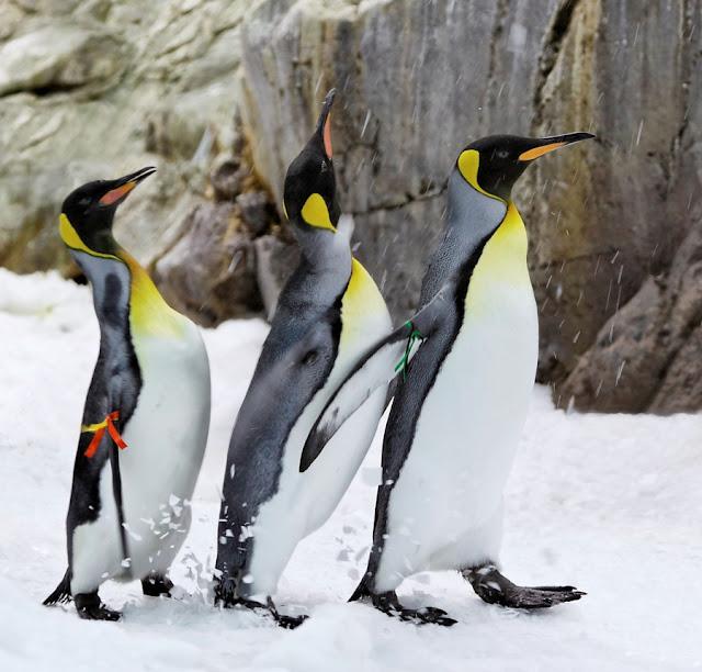 penguin bird photo