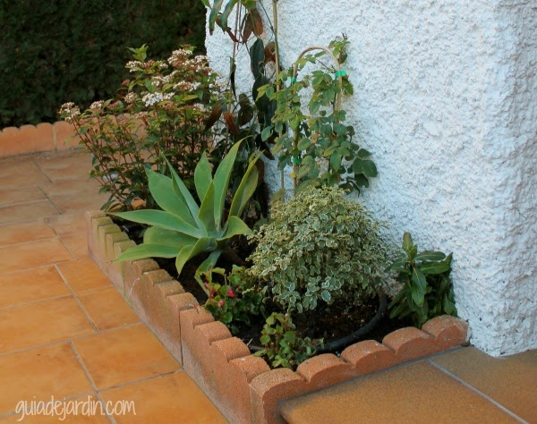 Arreglando el arriate de la terraza guia de jardin - Arriate plantas ...
