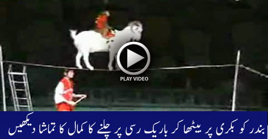 A Monkey on a Goat on a Cup on a Tightrope - Watch Amazing Video