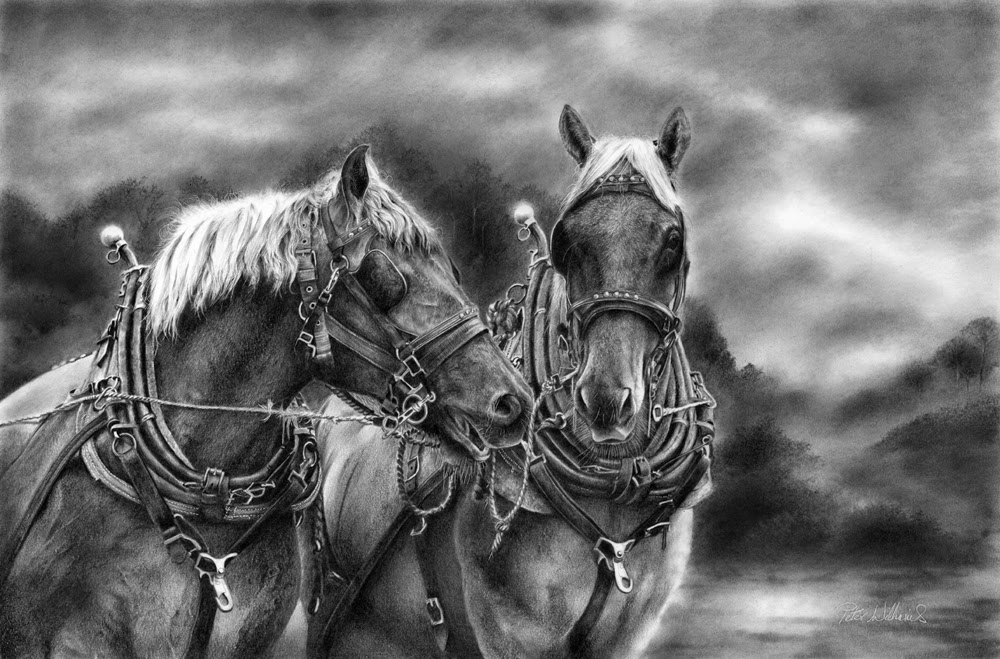 15-Two-Suffolk-Punch-Horses-Hyper-Realistic-Wildlife-Peter-Williams-www-designstack-co