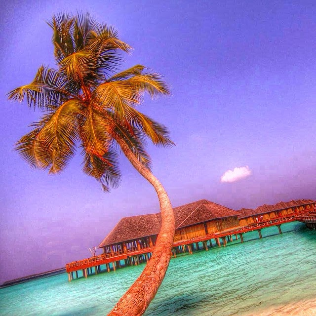 Пальма-на-Мальдивах
