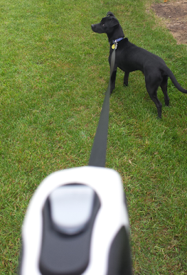 Boo-Boo on the Esky Retractable Dog Leash