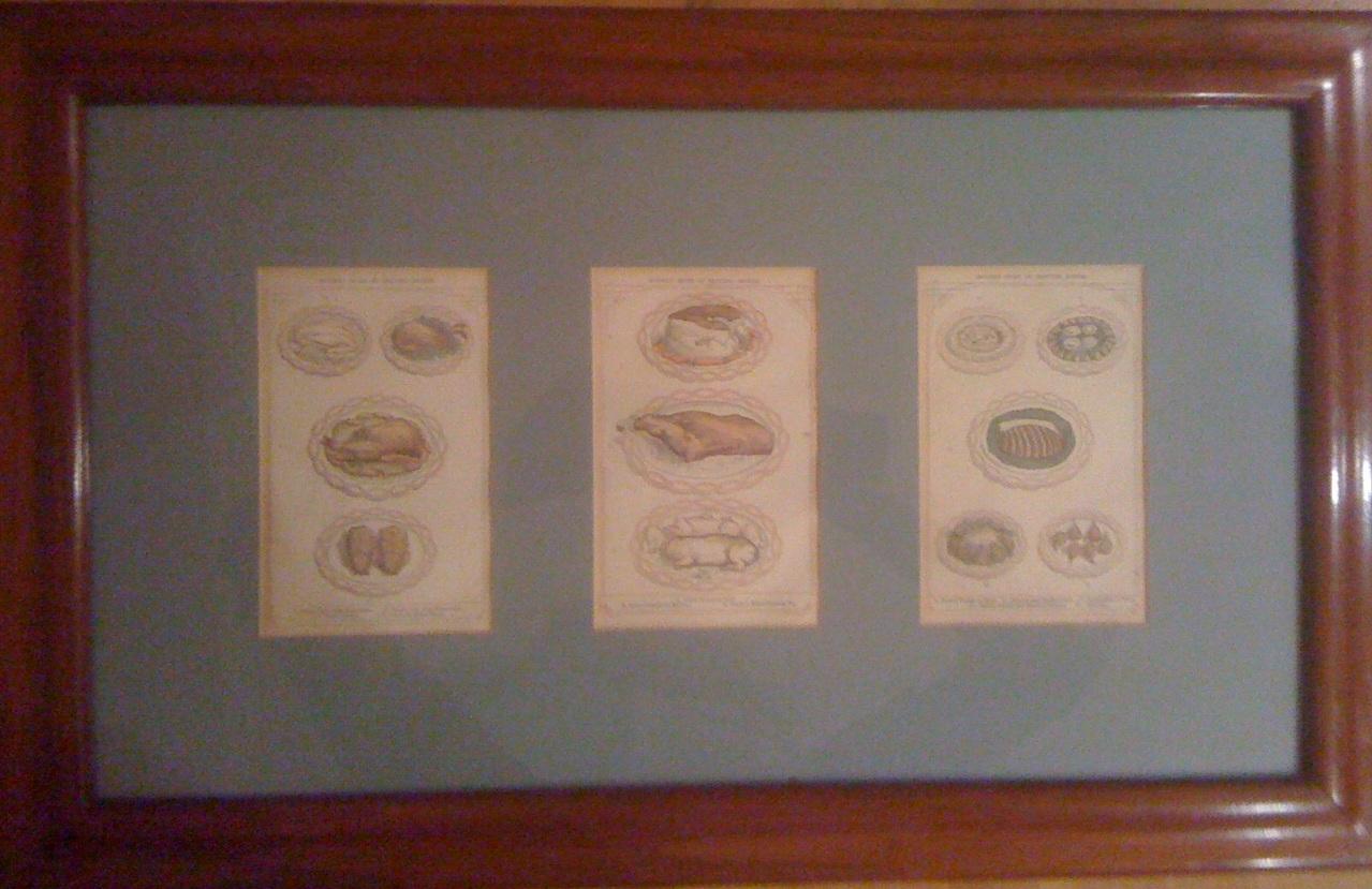 A and a stampe antiche in cucina for Stampe da appendere