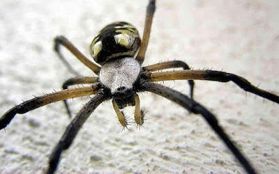 Best top desktop spider wallpapers hd spider pictures images photos 5.jpg