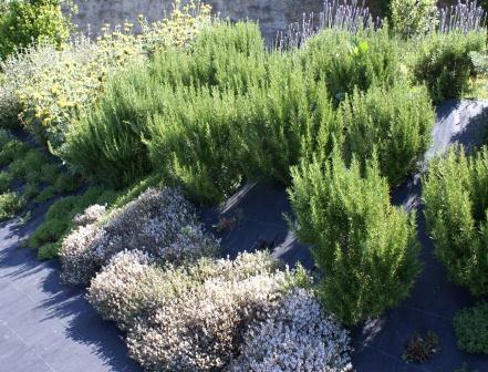Um jardim para cuidar poupe gua escolha plantas - Plantas de exterior resistentes ...