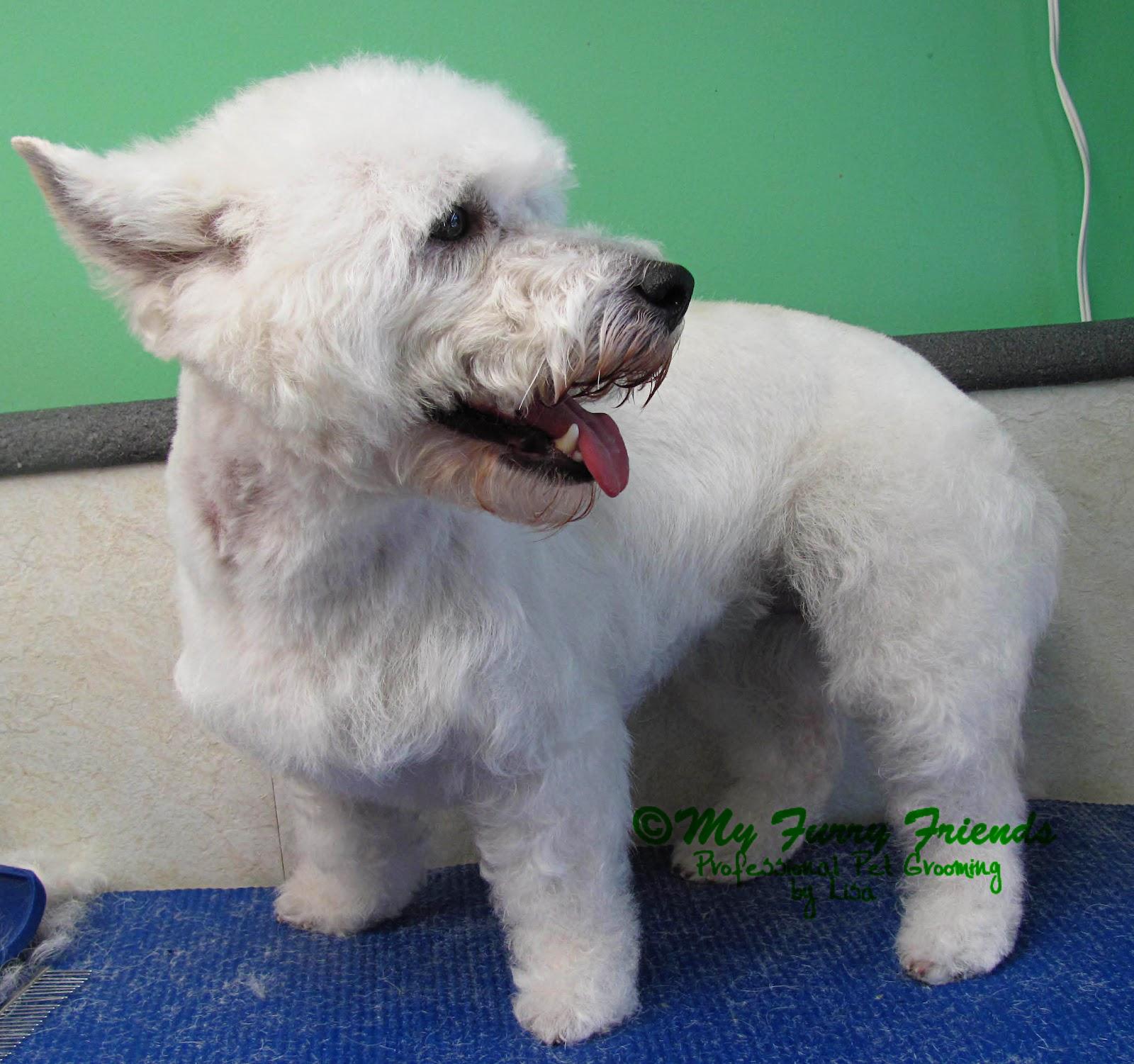 Dog Grooming Curly Hair Head Look Good