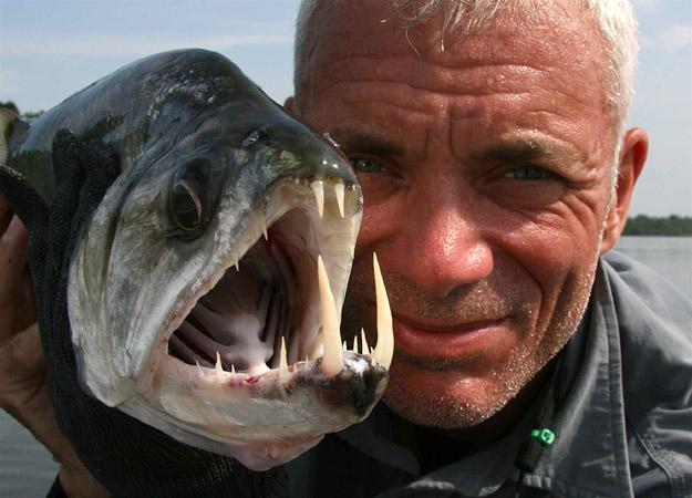 Payara ή ψάρι βαμπίρ το φρικιαστικό αυτό
