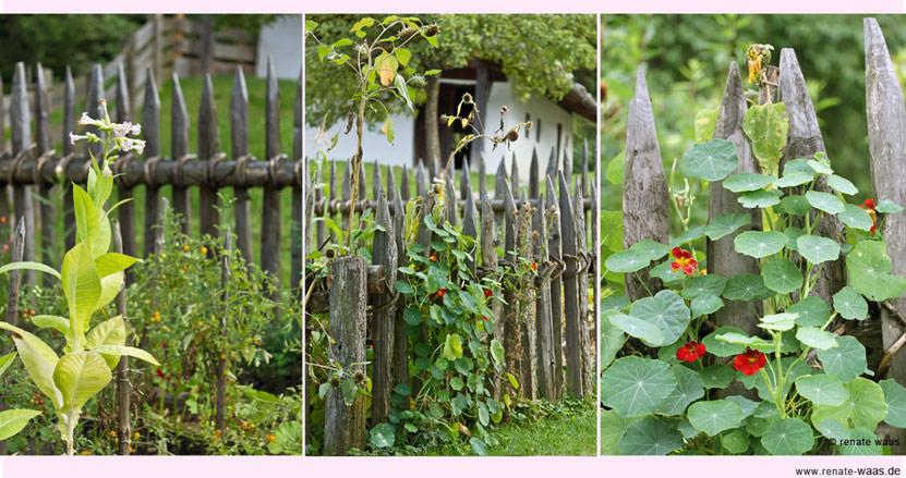 Gartenblog geniesser garten bauerngarten - Holzzaun garten ...