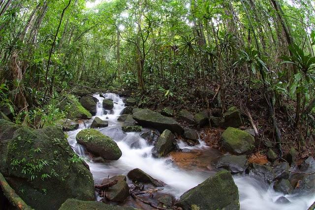 Gambar Hutan