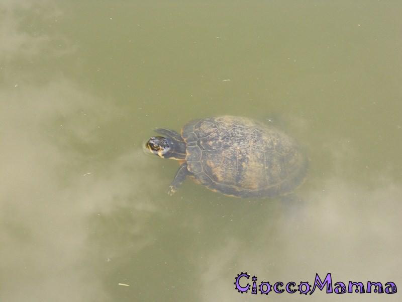Cioccomamma gita a cumiana e tartarughe for Sassi per tartarughe