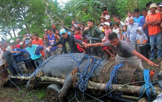 اصطياد أكبر تمساح حي على سطح الكرة الأرضية في الفلبين (صور + فيديو)
