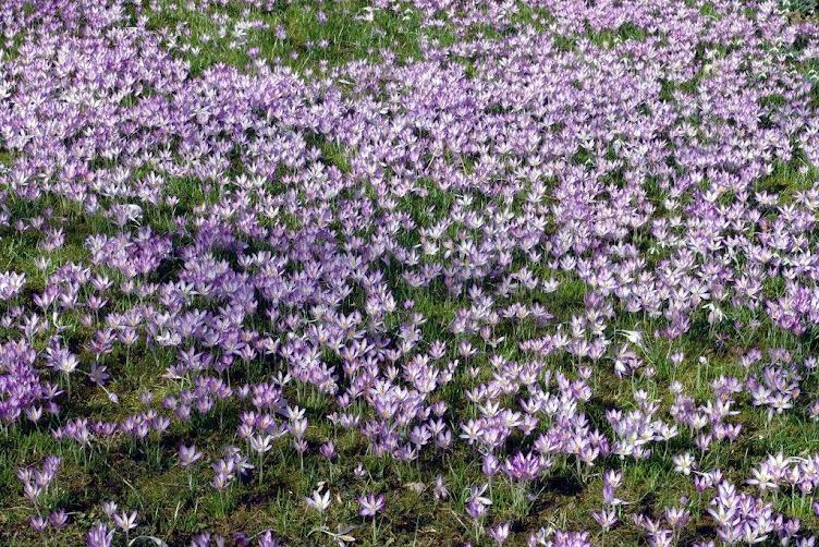 Der Frühling ist schon da!