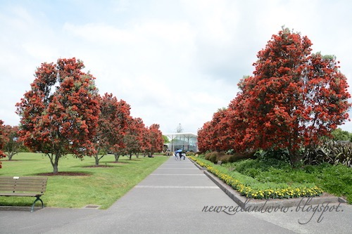Brilliant Red Tree