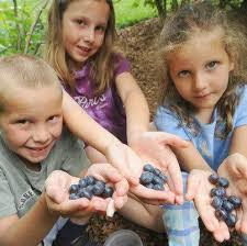 Manfaat Buah Blueberry Untuk Wajah