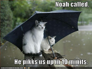 funny-pictures-cats-umbrella-rain-flood.