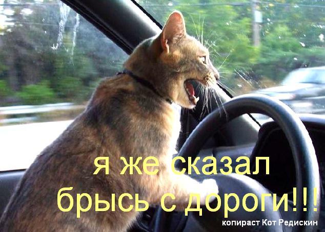 Брысь с дороги, кот за рулем