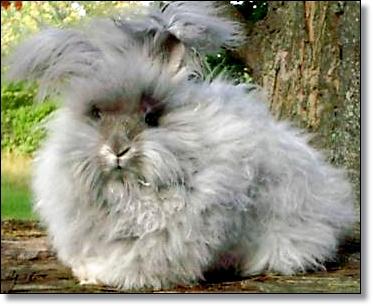 Maribaya Rabbit Farm Aneka Jenis Amp Nama Kelinci Hias
