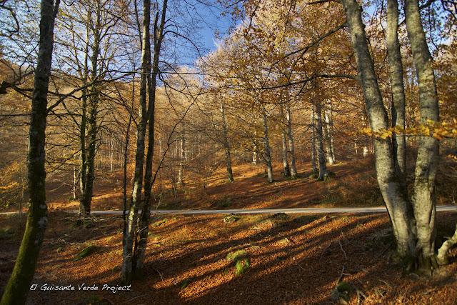Bosque de Irati, por El Guisante Verde Project