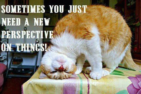 Cat(Positive+Inspirational+Quotes).jpg