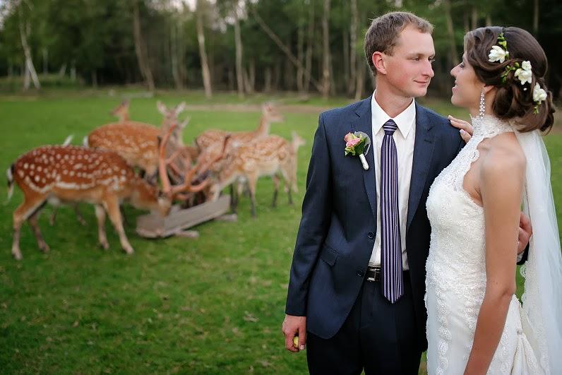 vestuvių fotosesija su laukiniai gyvūnais