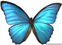 Butterfly emoticon for facebook