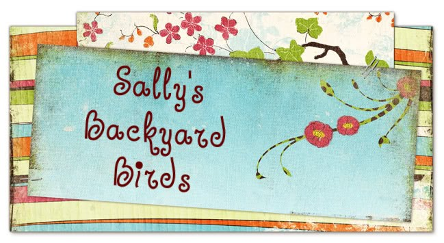 Sally's Backyard Birds