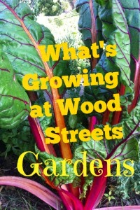 Swiss chard growing at Wood Streets Gardens