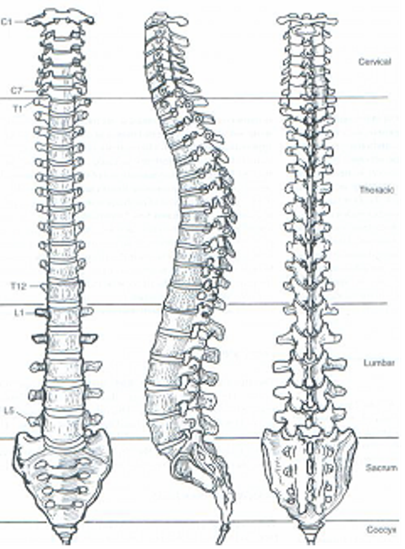 Nanaimo Chiropractors The Lifehouse Quot Why The Spine