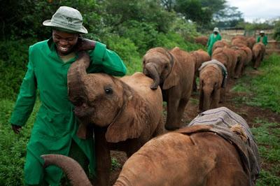 Manada de elefantes por el campo by Michael Nichols