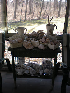 Vases and Seashells