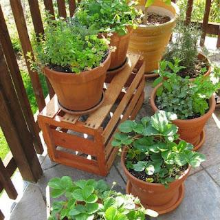 balcone con belle piante immagine
