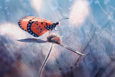 http://4.bp.blogspot.com/-I4JkKFHGlmA/UE1fprZmdKI/AAAAAAABHEE/sIH7r_7tWXo/s1600/mariposa-butterfly-insectos.jpg