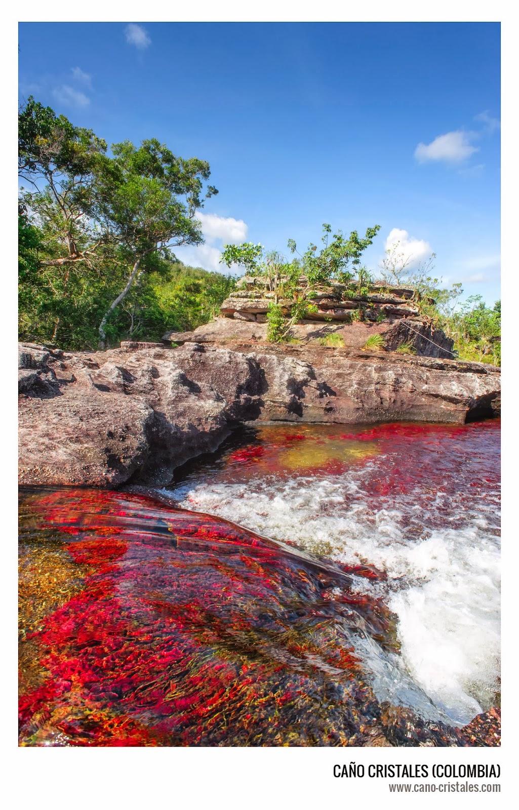 Caño Cristales el río de los cinco colores