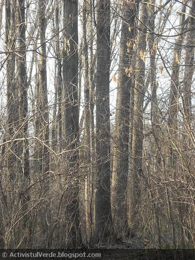 Voinicii prefăcuţi în arbori...