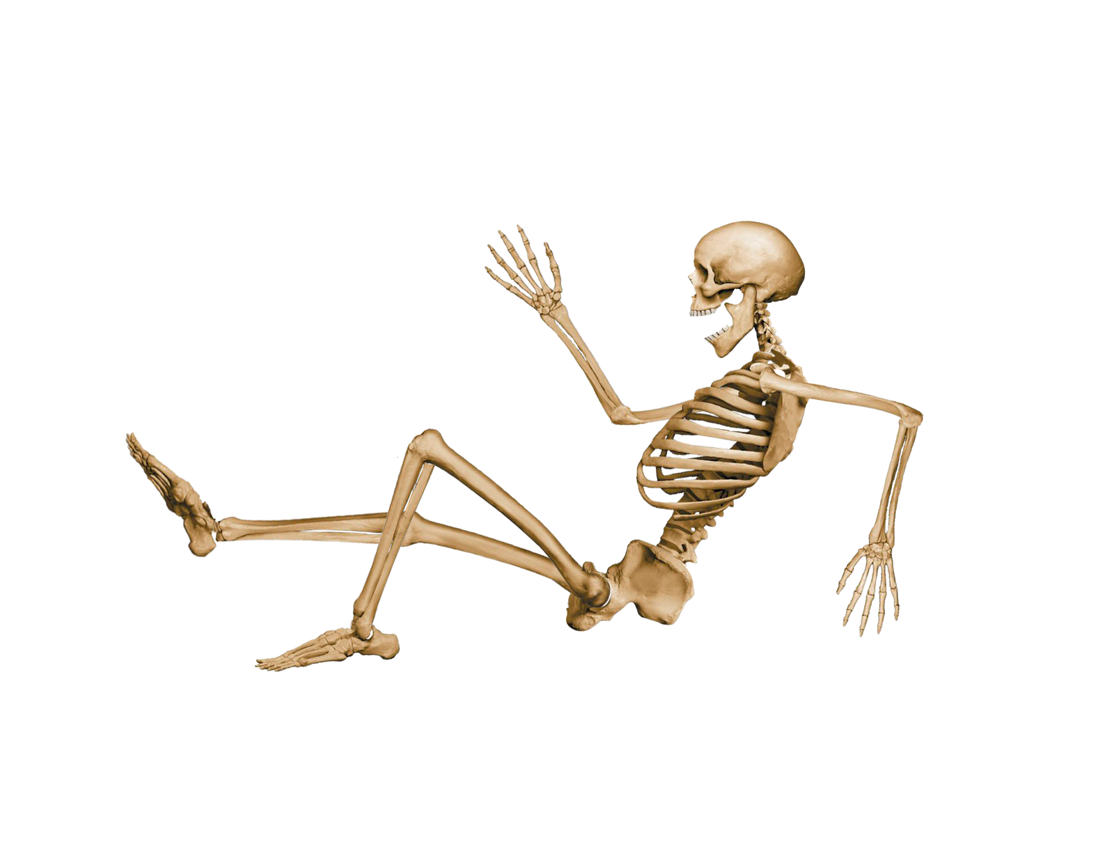Human bones png - photo#7