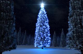 Arbol en la noche del bosque Arboles de navidad de noche