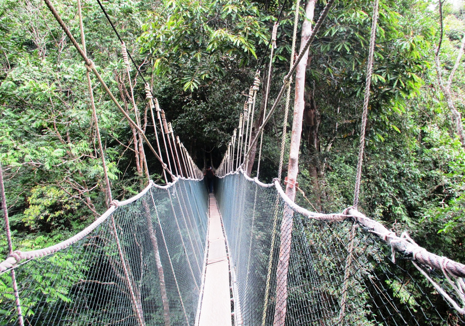 It can be scary for those who are afraid of heights as the canopy walkway is about 41-43 meters above the forest floor slightly higher than a 8-floor ... & KINABALU: CANOPY WALK CHALLENGE - PORING HOT SPRING