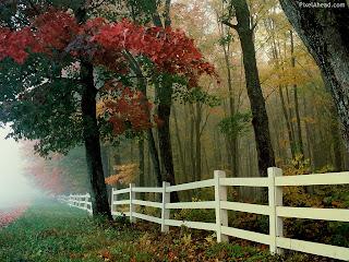 free new nature desktop wallpaperWallpapers For Desktop Nature