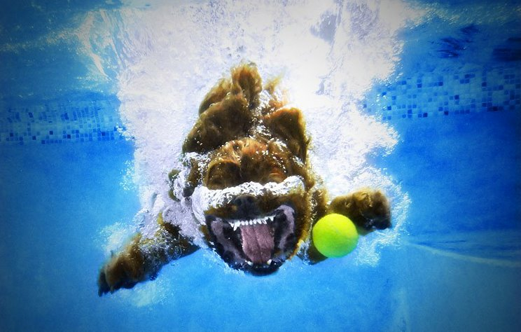 Stylons Diving Dogs Photography Ruff Waters Seth Casteel Hunde Tauchen