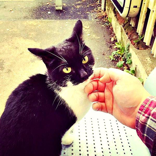 station cat gipsy hill