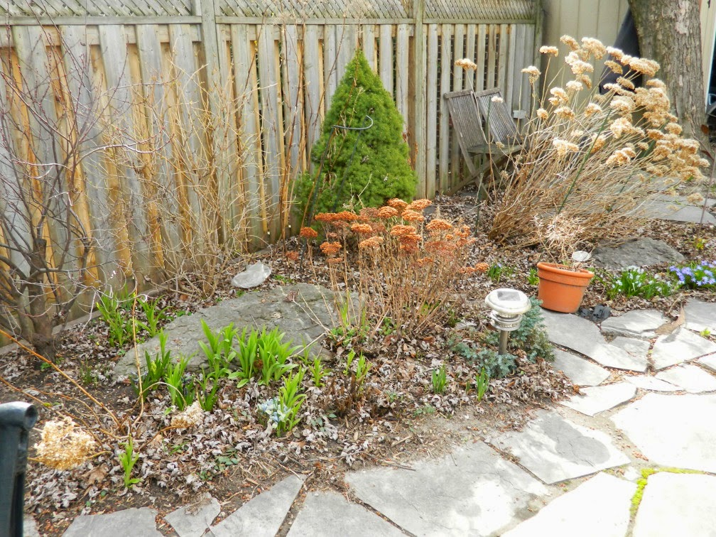Leslieville spring garden clean up before Paul Jung Gardening Services Toronto